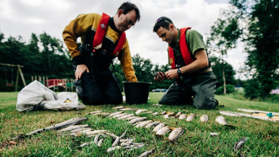 Two men sorting through dead fish