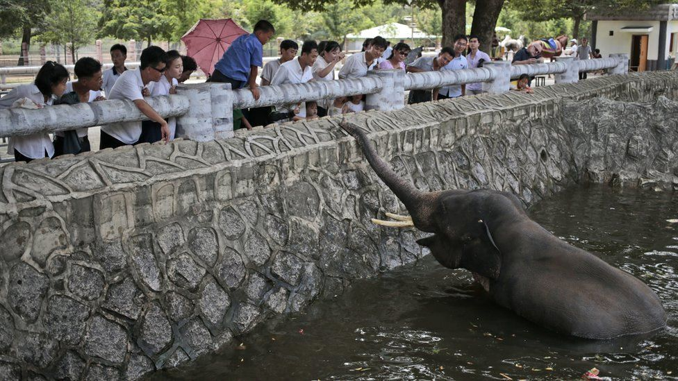 North Koreans feed an elephant at the newly opened Pyongyang Central Zoo in Pyongyang, North Korea, Tuesday, Aug. 23, 2016.