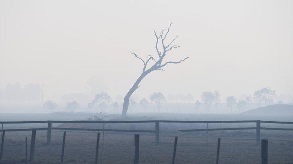 A dead tree and haze in Glen Innes, NSW