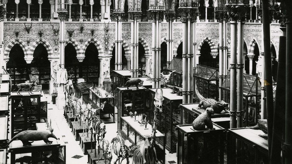 Museum of Natural History in Oxford in 1890