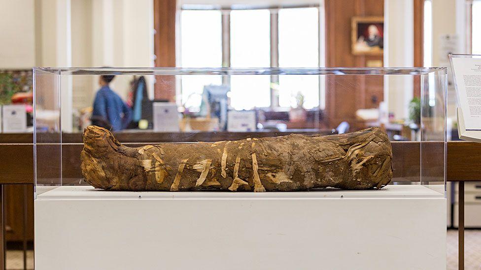 Mummy in display case