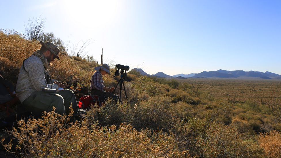 Monitoring wildlife