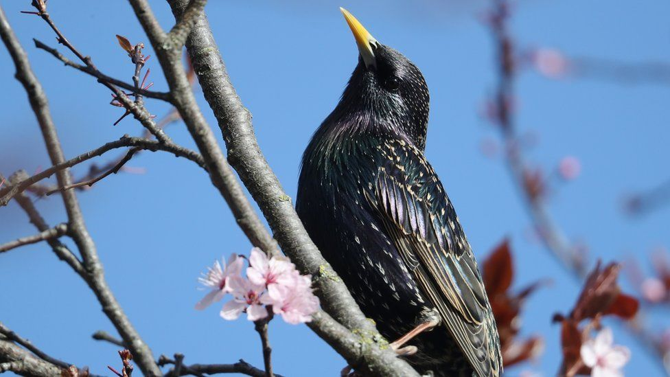 Starling sits in tree