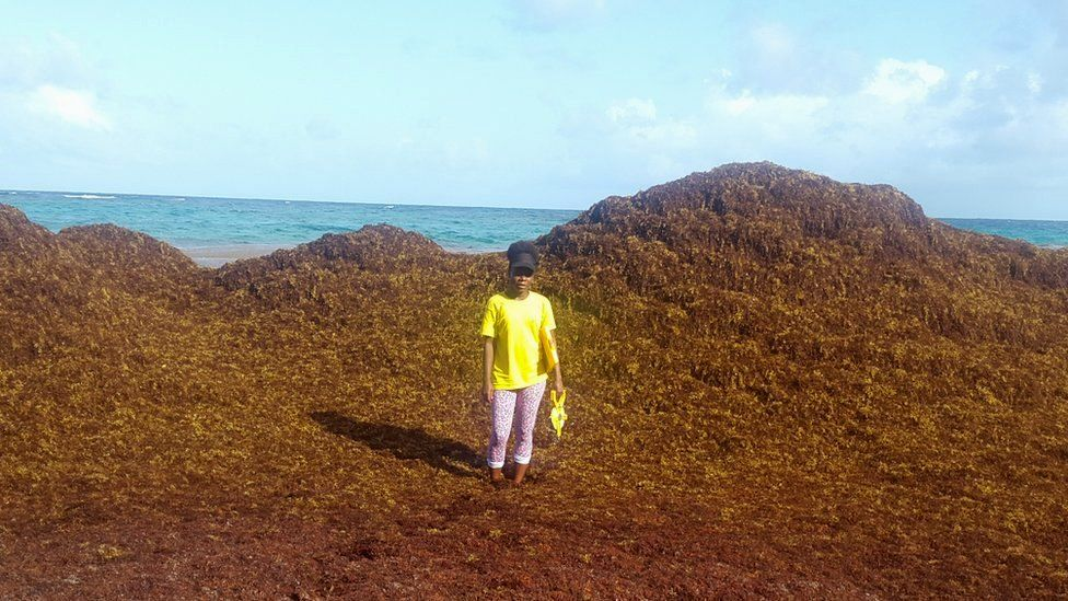 Carla Daniel standing amid a mountain of sargassum on 8 June, Falmouth Beach, Barbados