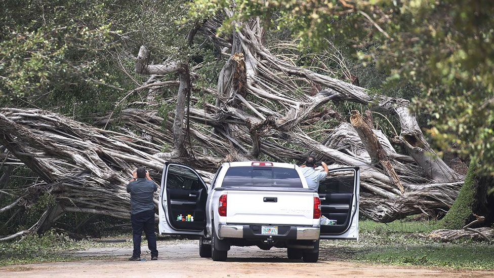 Tree fallen in Miami