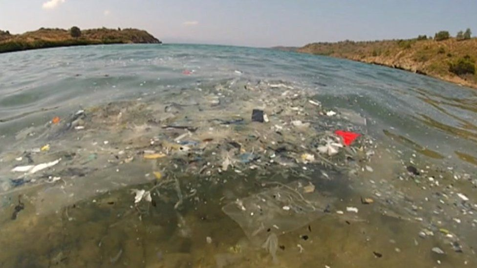 A polluted sea