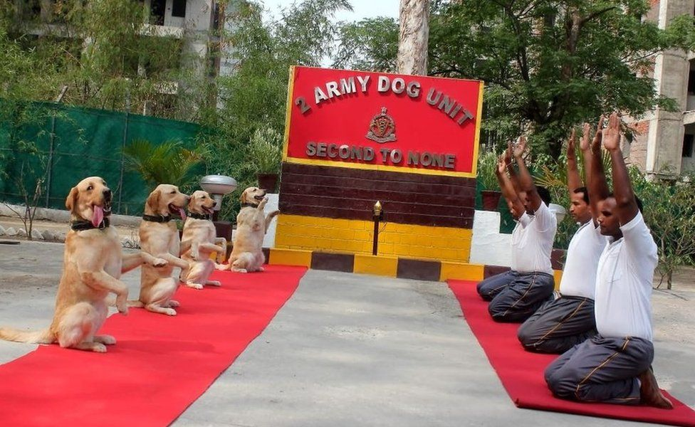 Dogs doing yoga with Indian army