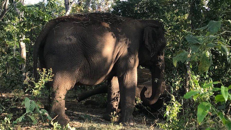 A emocionante despedida de elefantas que viveram por 40 anos em cativeiro no Brasil