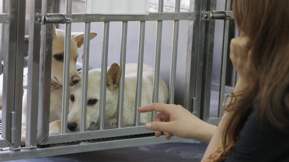 A woman points at two white dogs in a cage