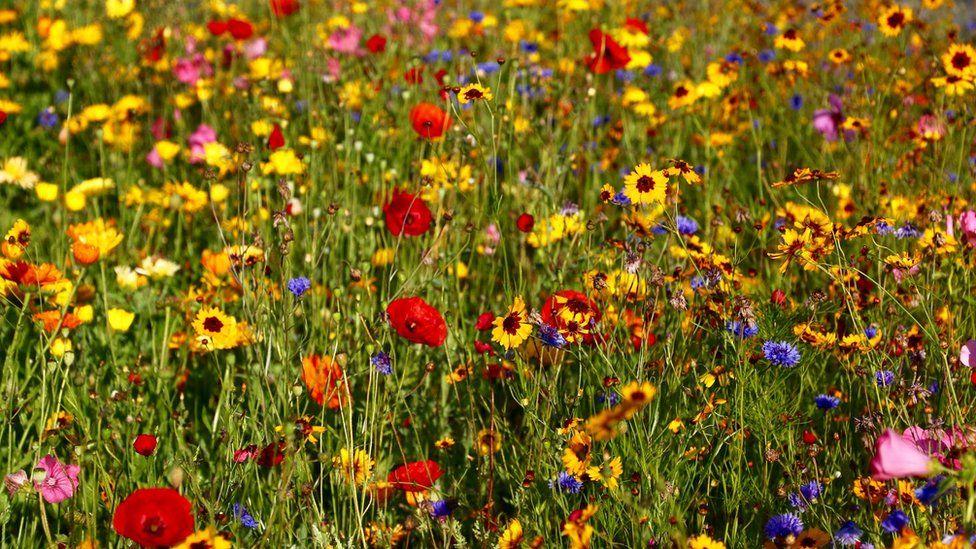 Wild flowers in Clydach, Swansea taken by Neil Bartlett