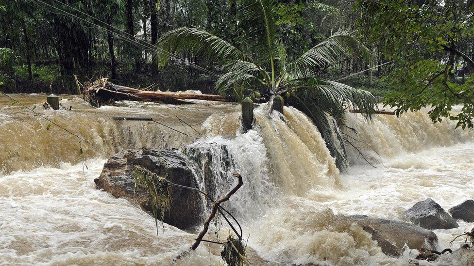 Gushing flood water in Kerala overturns a coconut tree
