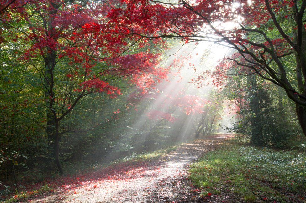 The sun shining through trees on a forest path