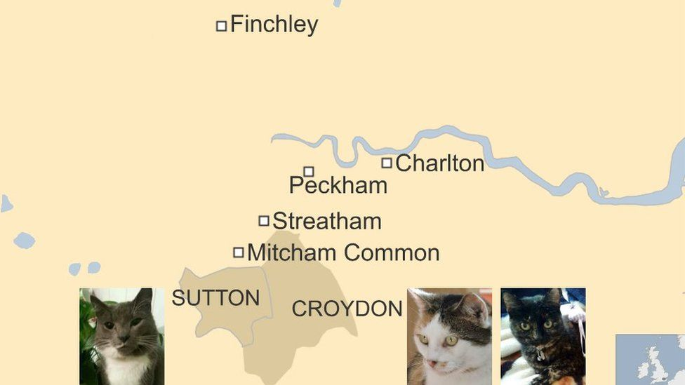Map of where the cats have been killed correct at 18 February 2016