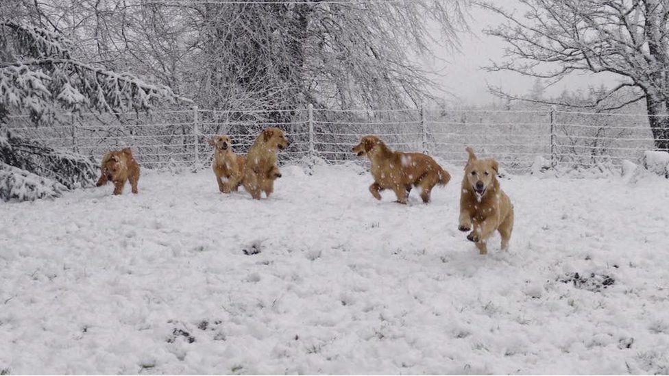 Five dogs running around in the snow