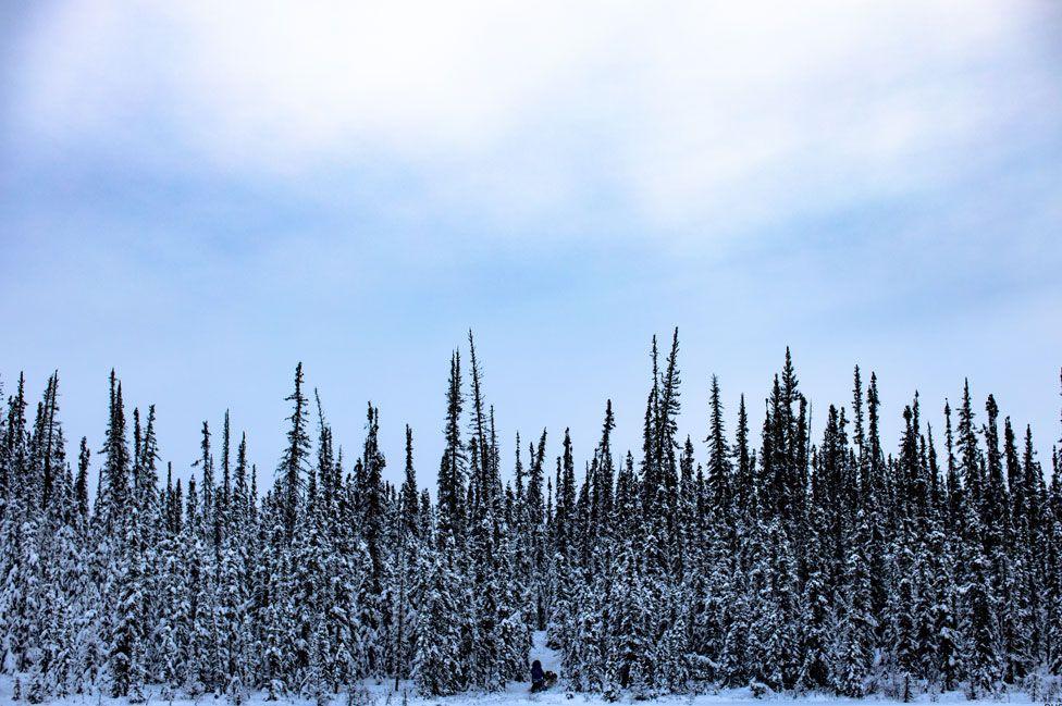 Snowy scene from Alaska