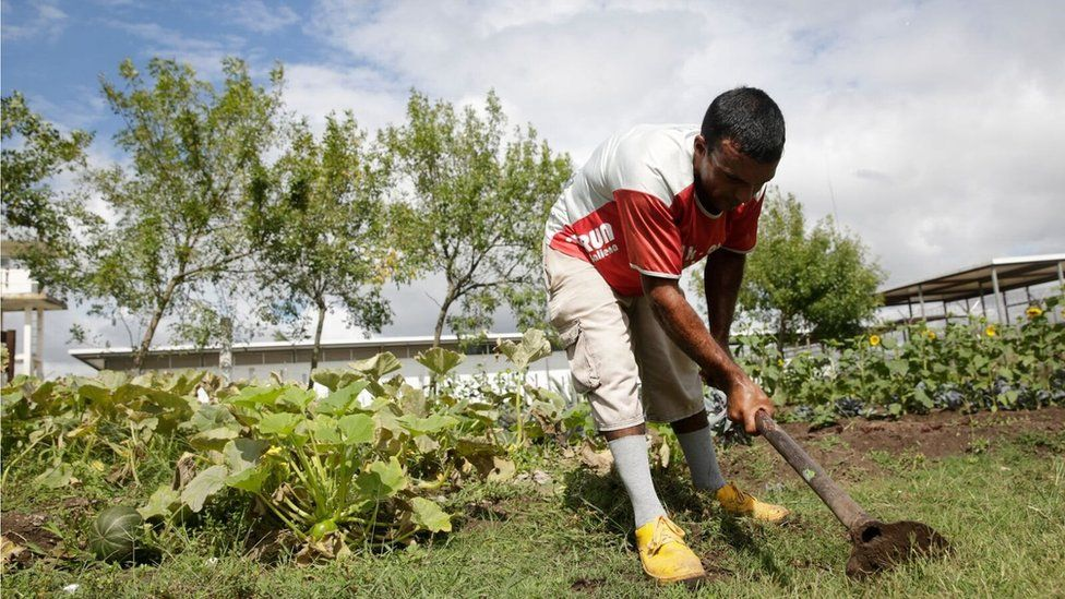 An inmates works in the vegetable garden at Punta de Rieles