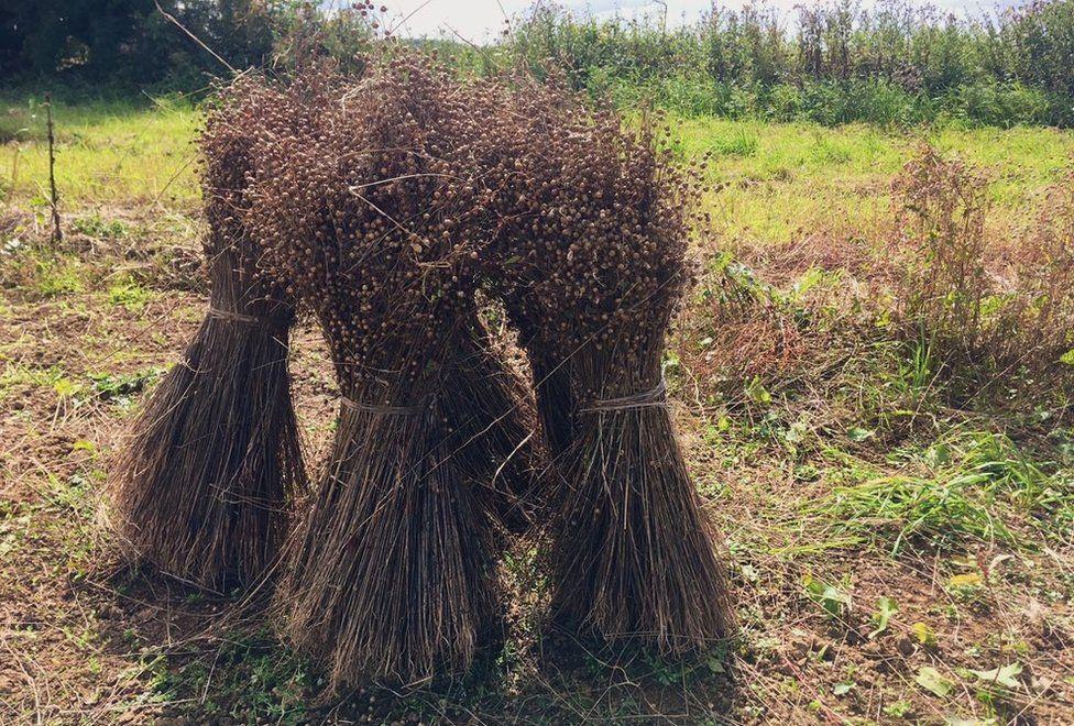Homegrown Homespun's first harvested flax