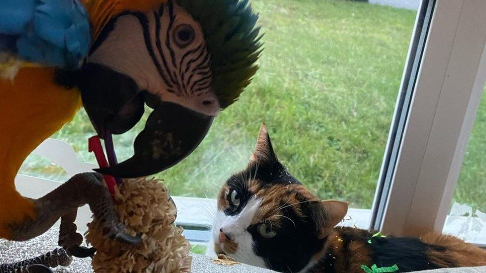 Parrot and cat