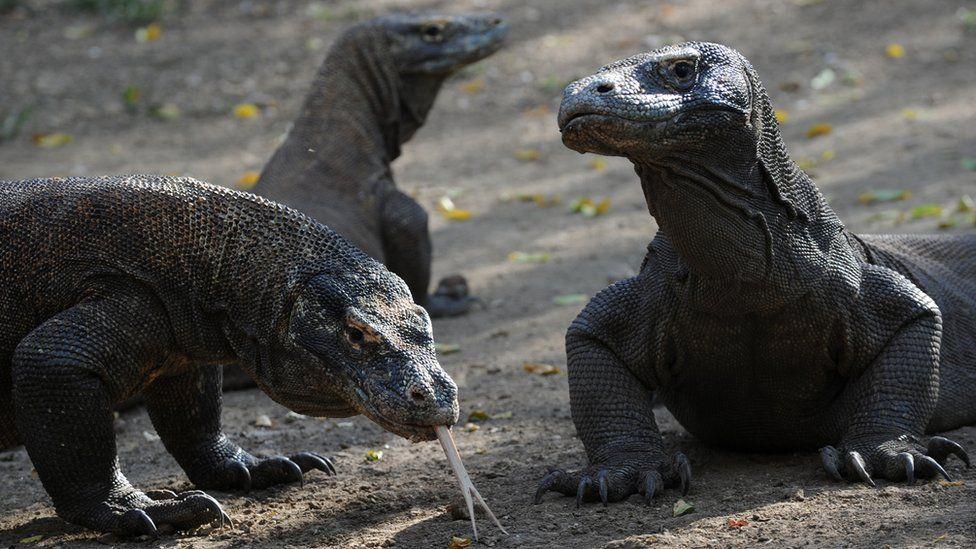 Micróbios, cavernas e dragões de Komodo: onde os cientistas buscam novos antibióticos