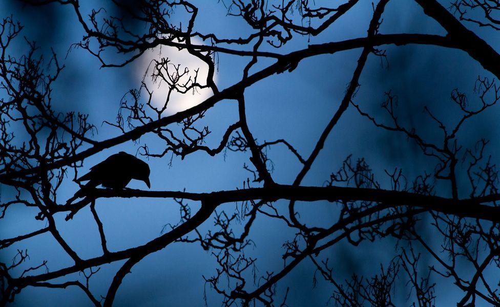 ворона и луна