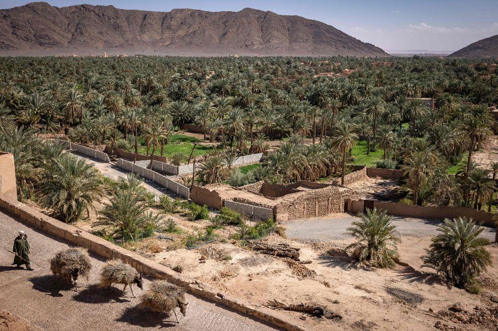 A view of Morocco's oasis town of Figuig - also showing three donkeys carrying loads - near the border with Algeria - Saturday 20 March 2021