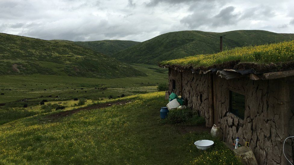 Tshe Bdag Skyabs family's summer settlement, with grass growing on the roof, overlooking a vast green landscape