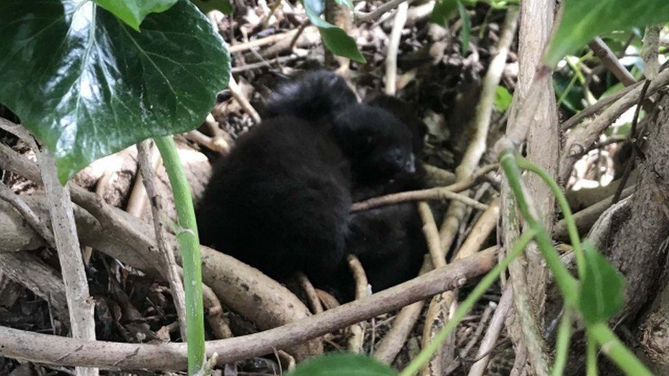 Kittens in a bird's nest