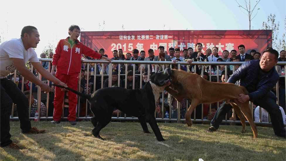 A dog fight in China