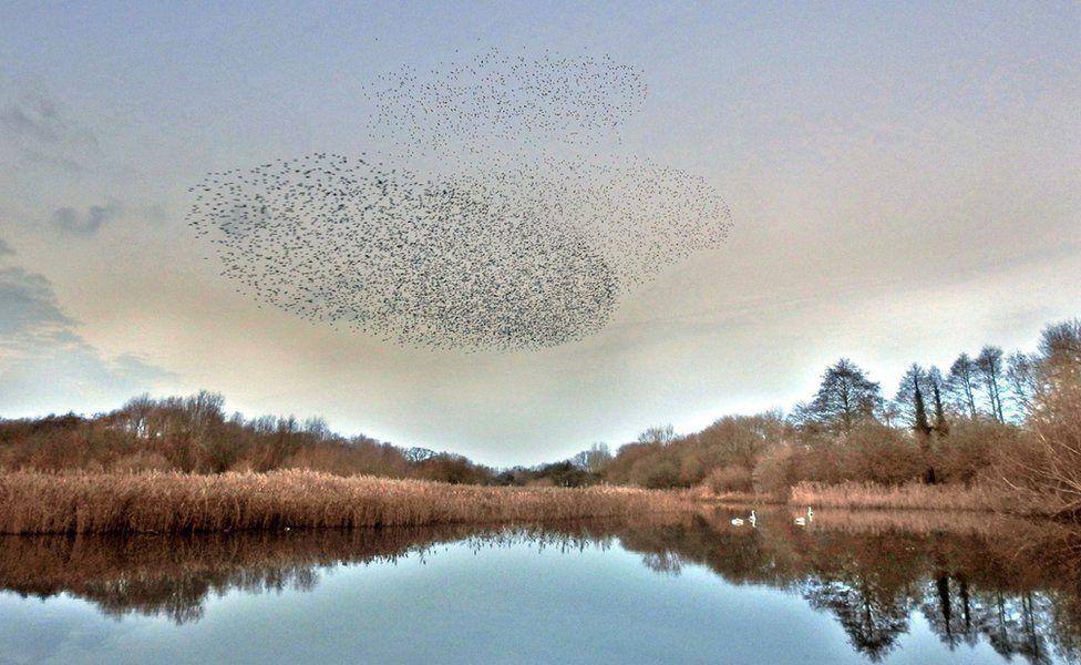 Delta pond at Attenborough Nature Reserve