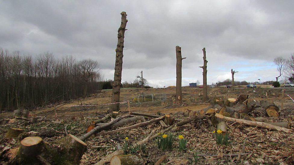 Trees removed to build the A21 in Sussex