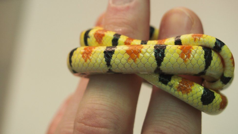 snake curled around fingers