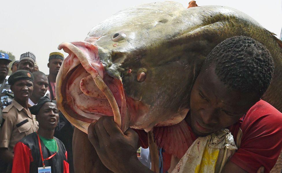 A man carrying a big fish at the Argungu fishing festival in Kebbi state, Nigeria - Saturday 14 March 2020