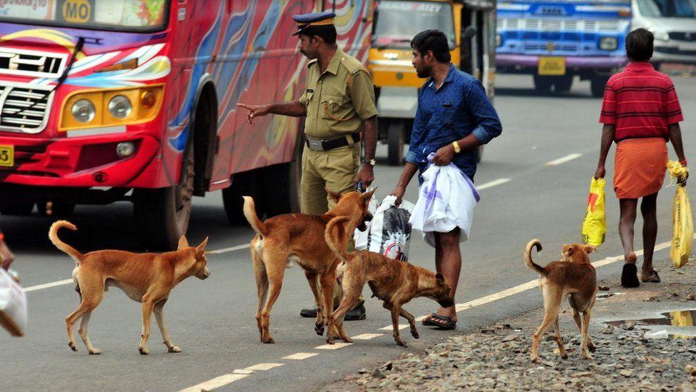 Dogs on a busy street in Kerala