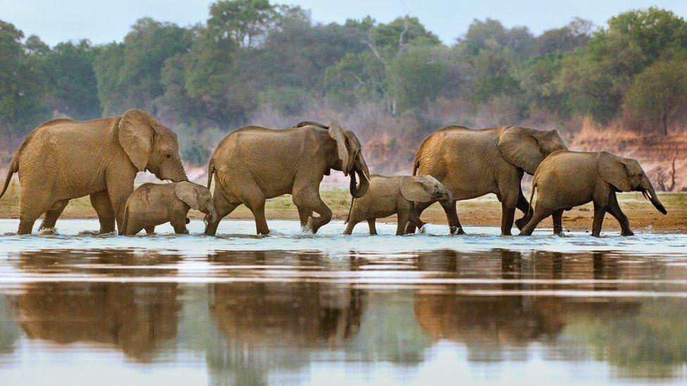 File photo of elephants