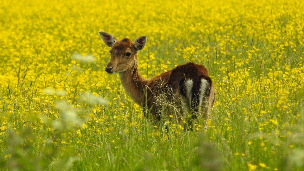 Deer in sunny meadow