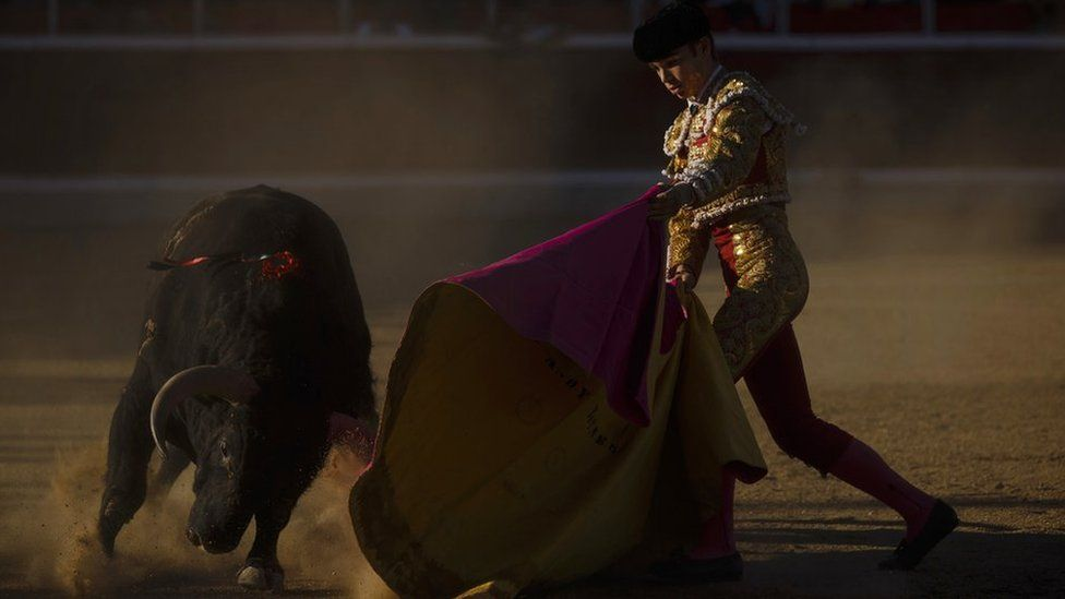 French bullfighter Andy Younes performs with a Montealto ranch fighting bull during a bullfight in Guadarrama, Spain, 2 Oct 2016