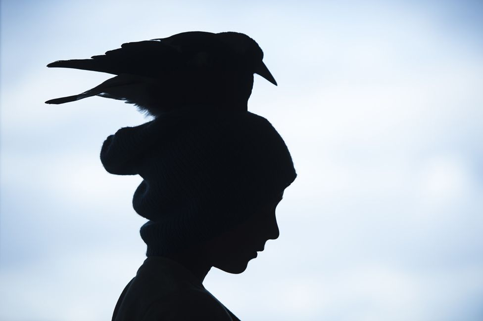 Penguin in silhouette