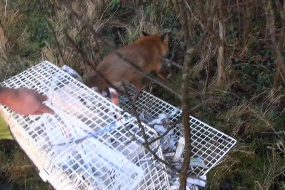 Fox being released