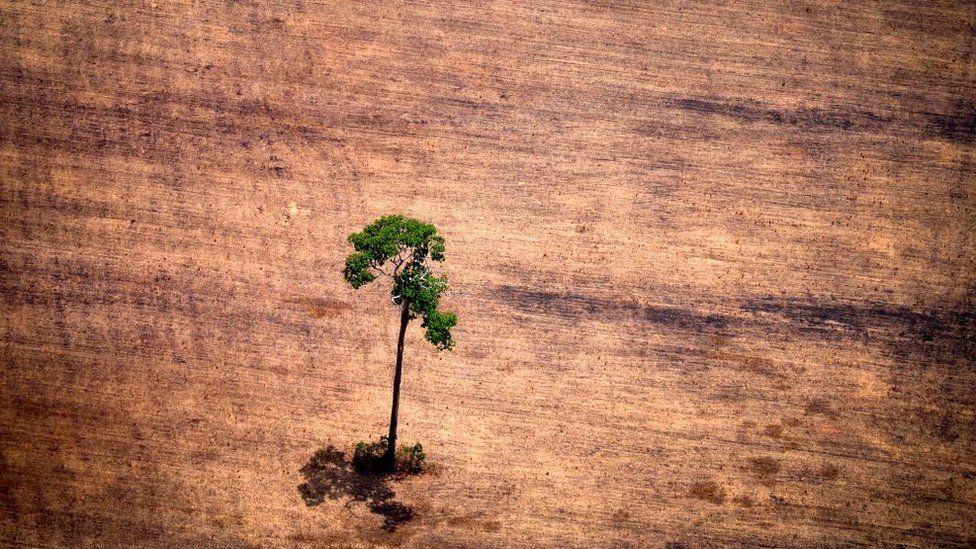 El estudio que muestra que las plantas se están extinguiendo dos veces más rápido que el resto de las especies