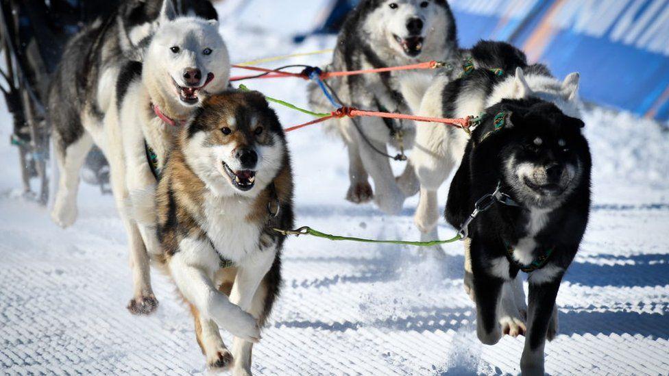 Права тварин: як собаки рятують дітей