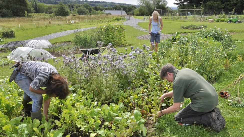 People planting at the National Garden of Wales
