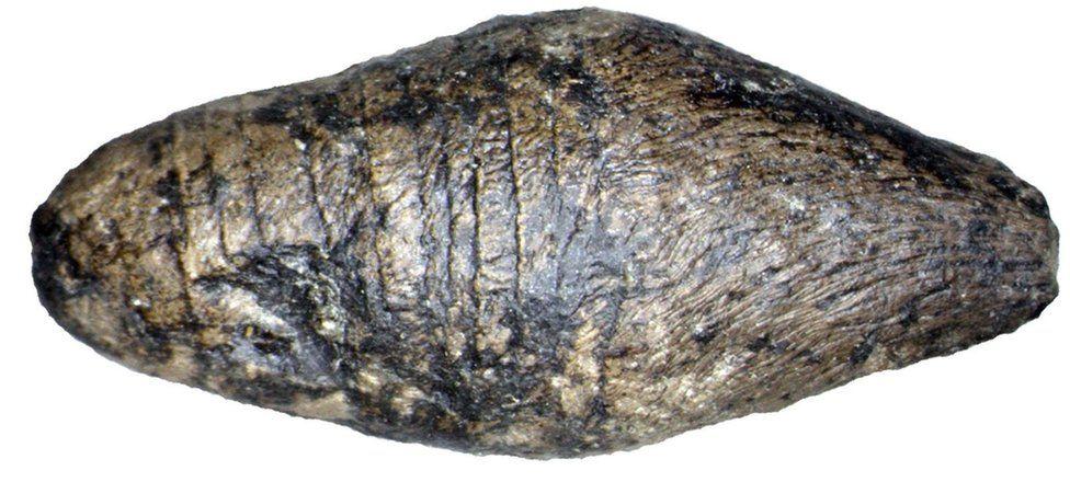 dung sample