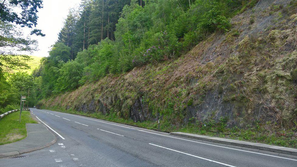 Trees on steep bank