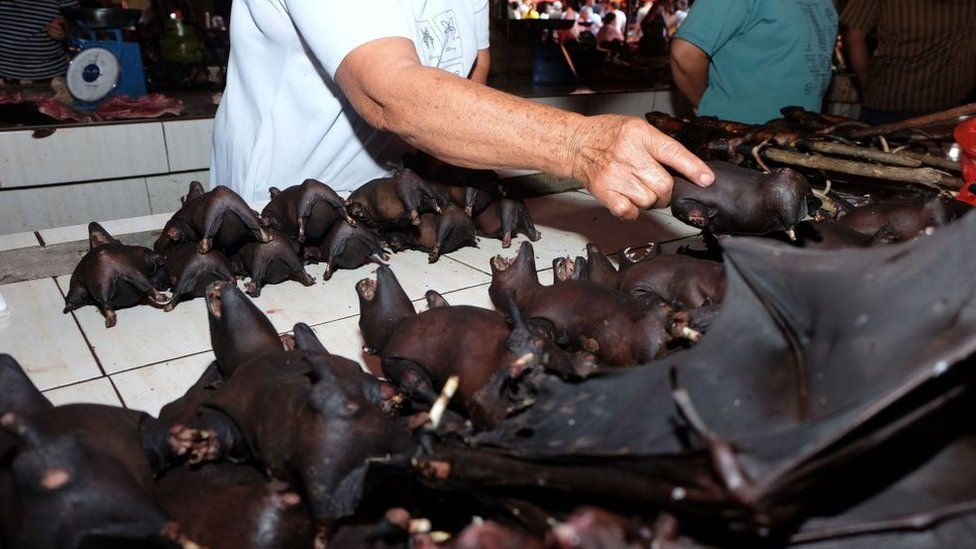 Bats being sold at an Indonesian market this month