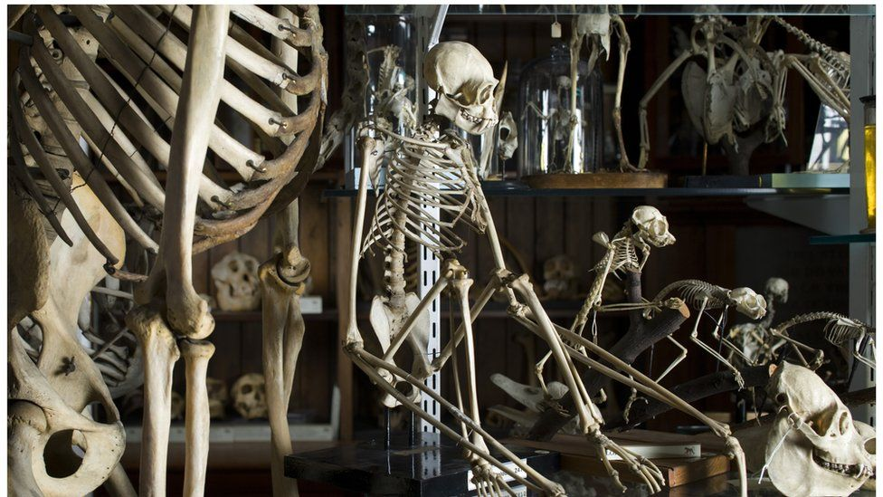 Skeletons in the UCL Grant Museum of Zoology