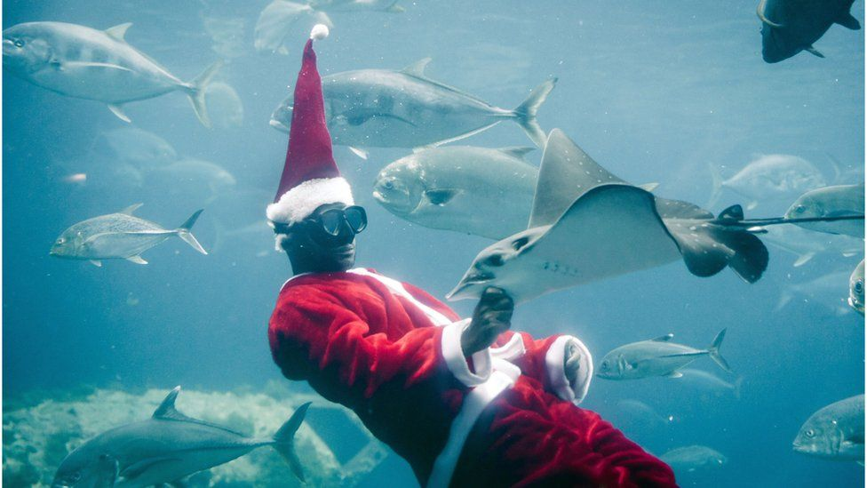 A South African diver feeds fishes dressed as Santa Claus at the uShaka Marine World in Durban - December 2018