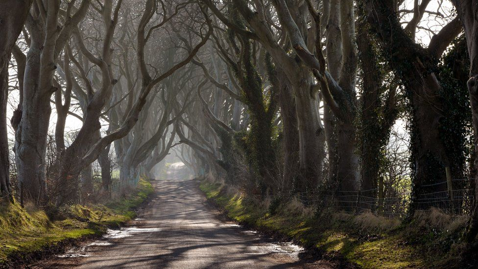 The Dark Hedges draw thousands of tourists to Northern Ireland