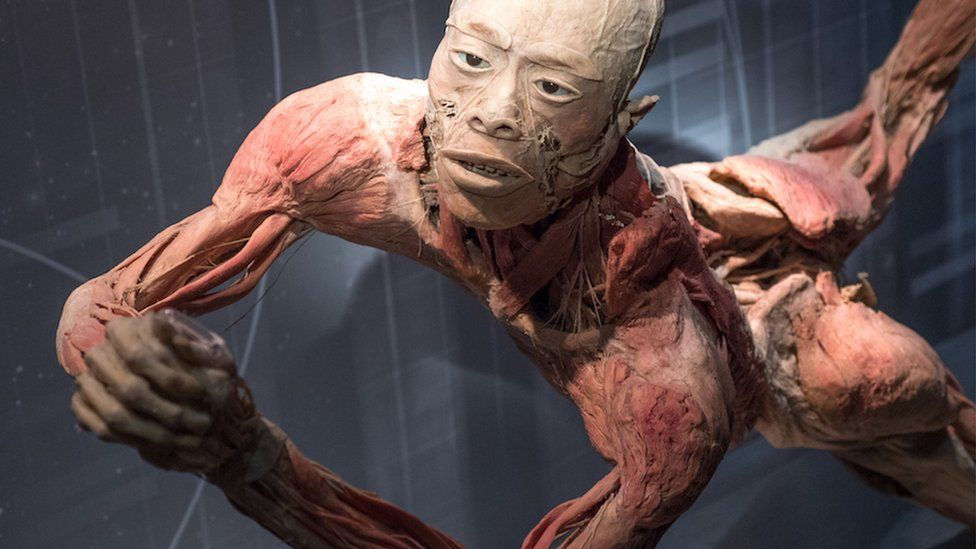 The preserved human body of a man on exhibit in Sydney
