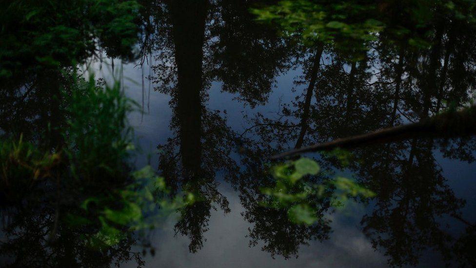 Poland's ancient Bialowieza Forest
