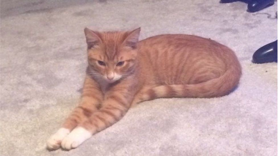 Rusty, the ginger cat